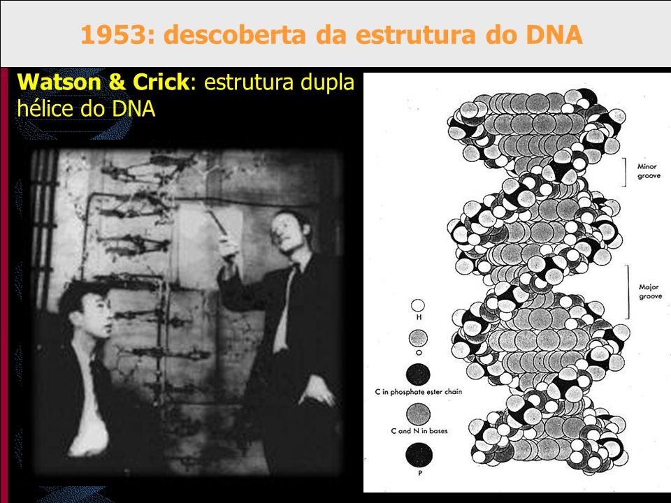 1953: descoberta da estrutura do DNA