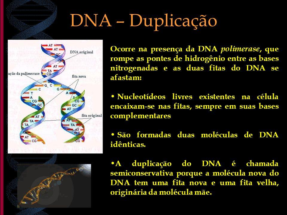 DNA – Duplicação