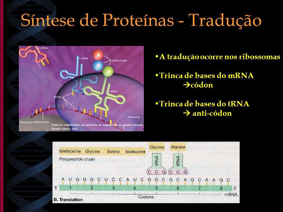 Síntese de Proteínas - Tradução