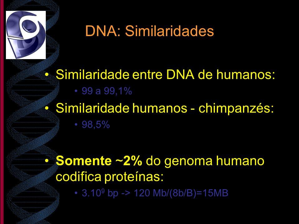 DNA: Similaridades Similaridade entre DNA de humanos: