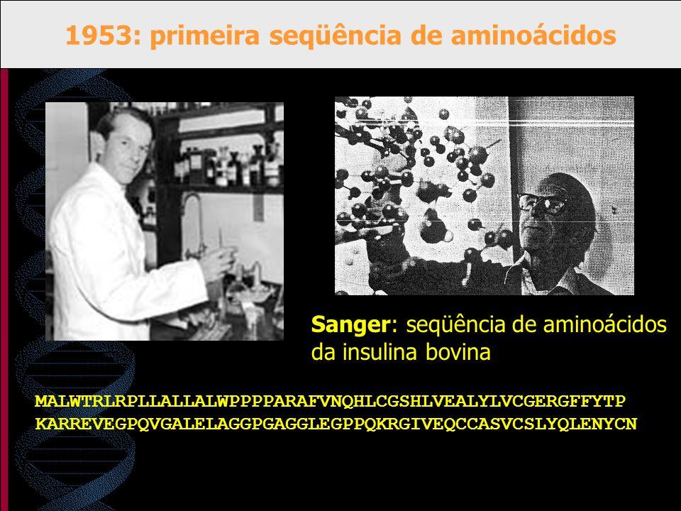 1953: primeira seqüência de aminoácidos