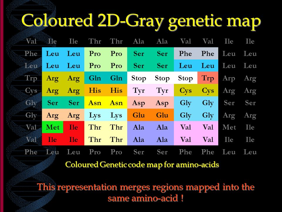 Coloured 2D-Gray genetic map