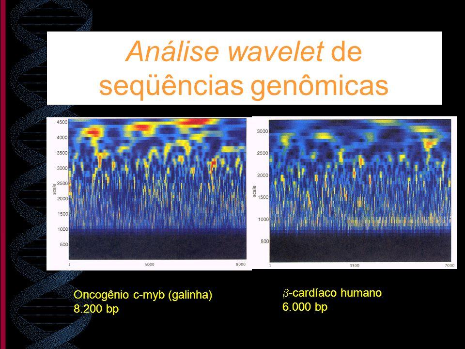 Análise wavelet de seqüências genômicas