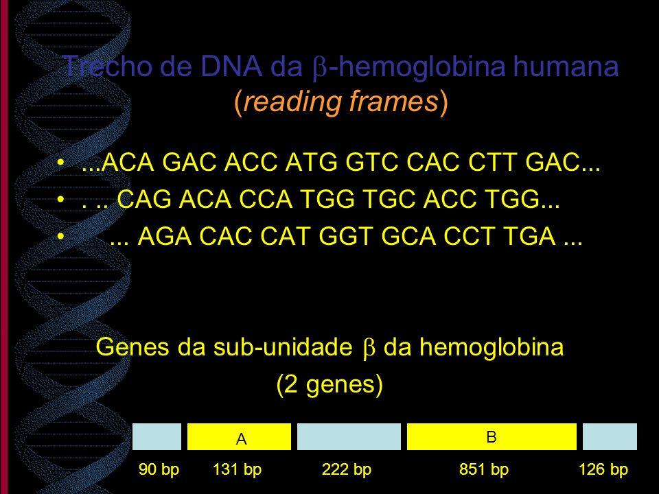 Trecho de DNA da b-hemoglobina humana (reading frames)