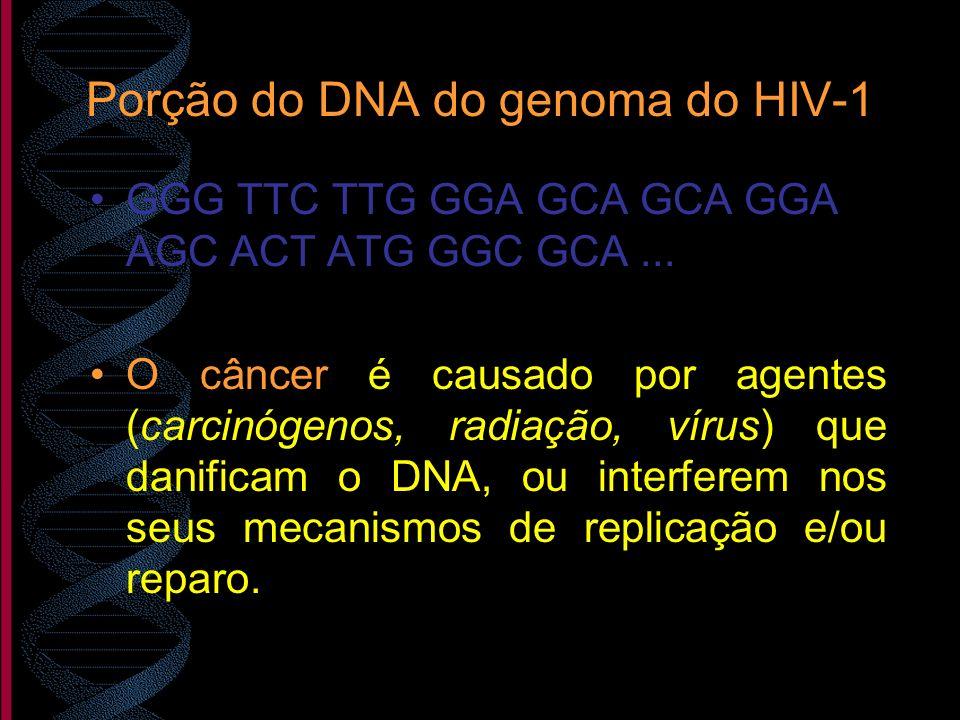 Porção do DNA do genoma do HIV-1