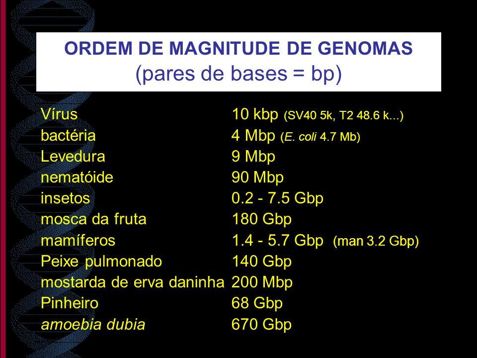 ORDEM DE MAGNITUDE DE GENOMAS (pares de bases = bp)