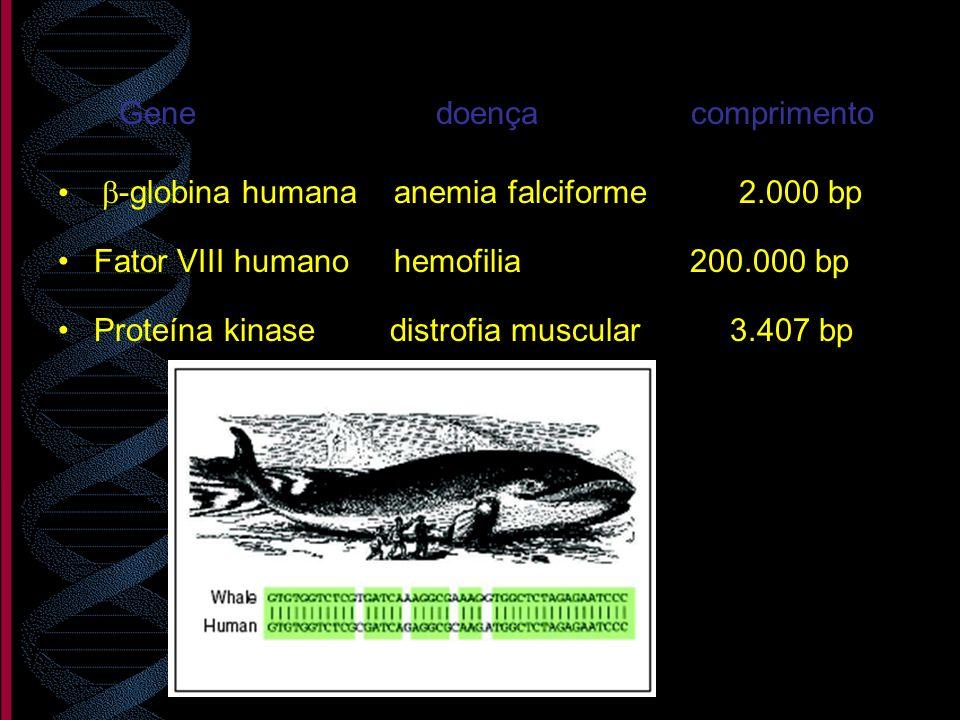 Gene doença comprimento