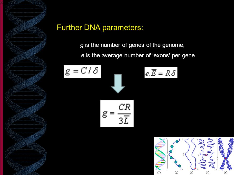 Further DNA parameters: