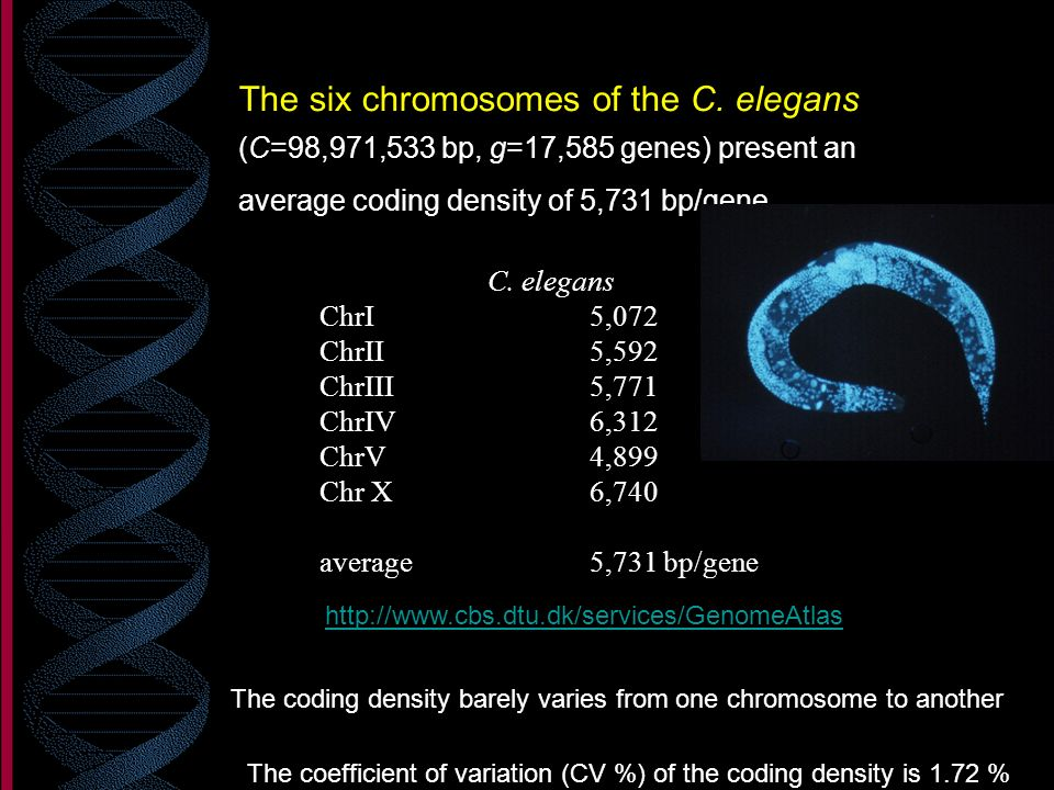The six chromosomes of the C. elegans