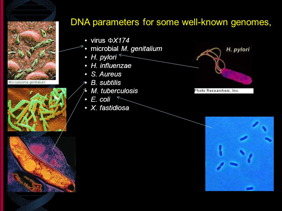 DNA parameters for some well-known genomes,