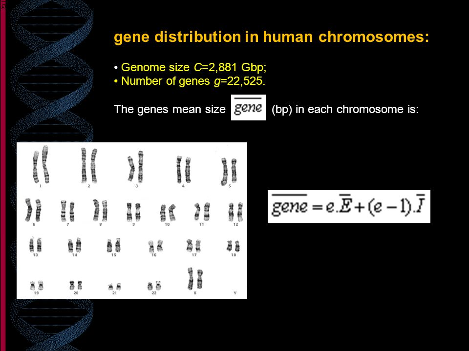 gene distribution in human chromosomes: