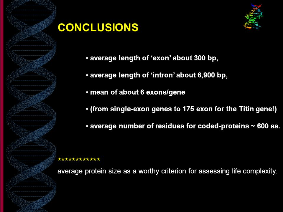 CONCLUSIONS ************ average length of 'exon' about 300 bp,