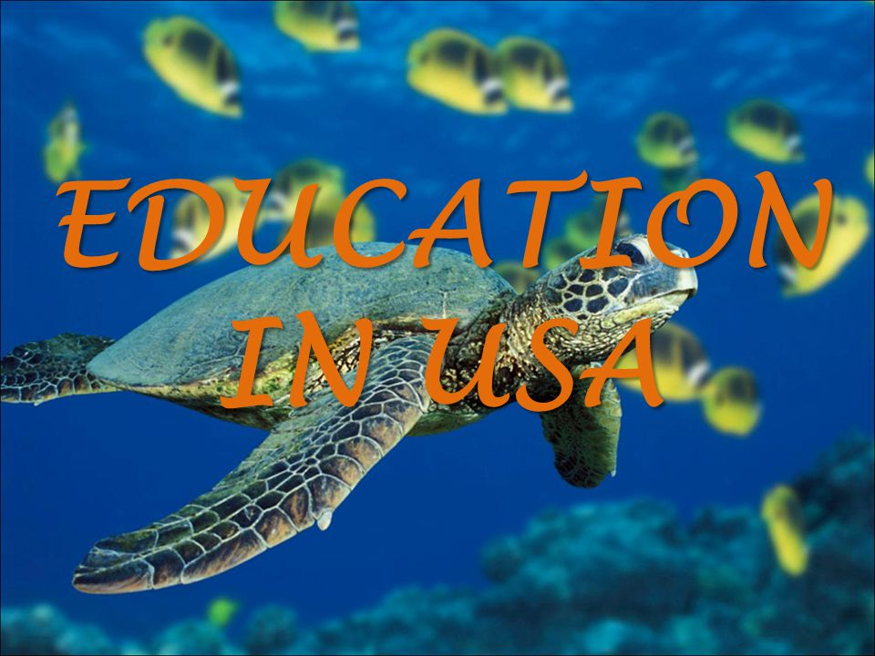 EDUCATION IN USA