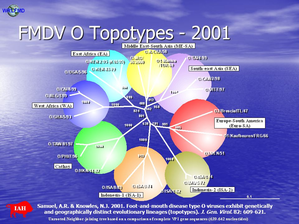 FMDV O Topotypes - 2001 IAH WRLFMD