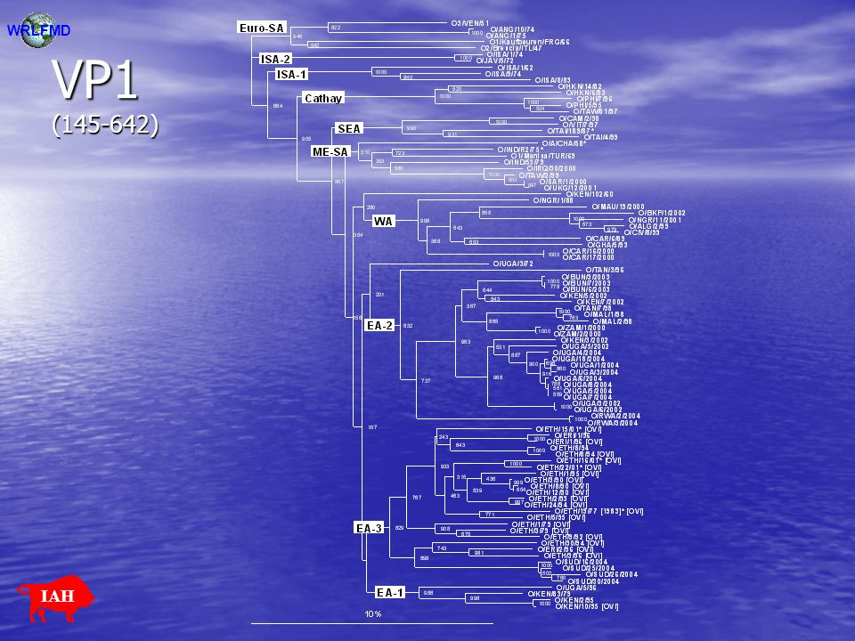 WRLFMD VP1 (145-642) IAH