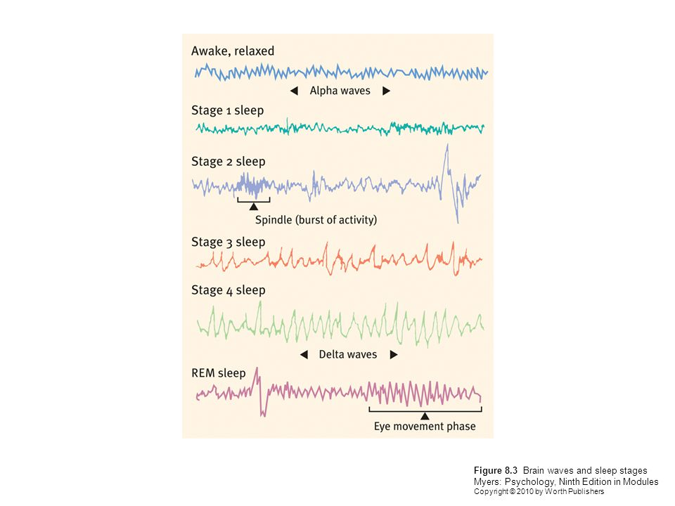 Figure 8.3 Brain waves and sleep stages Myers: Psychology, Ninth Edition in Modules Copyright © 2010 by Worth Publishers