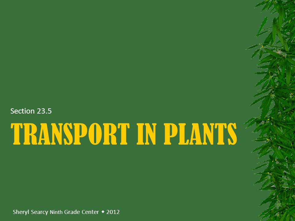 Section 23.5 Transport in plants