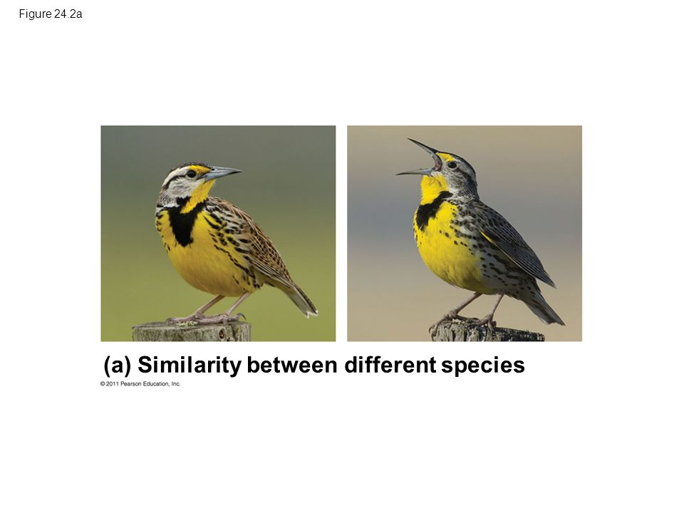 (a) Similarity between different species