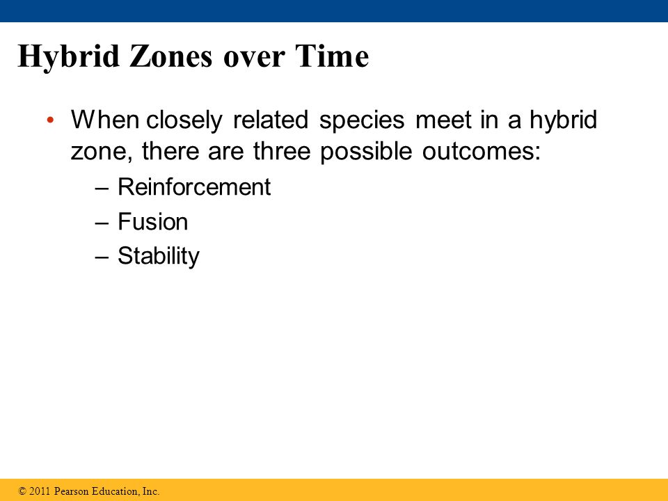 Hybrid Zones over Time When closely related species meet in a hybrid zone, there are three possible outcomes: