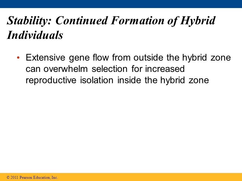 Stability: Continued Formation of Hybrid Individuals