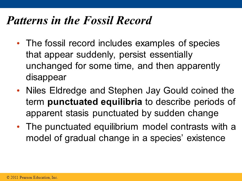 Patterns in the Fossil Record