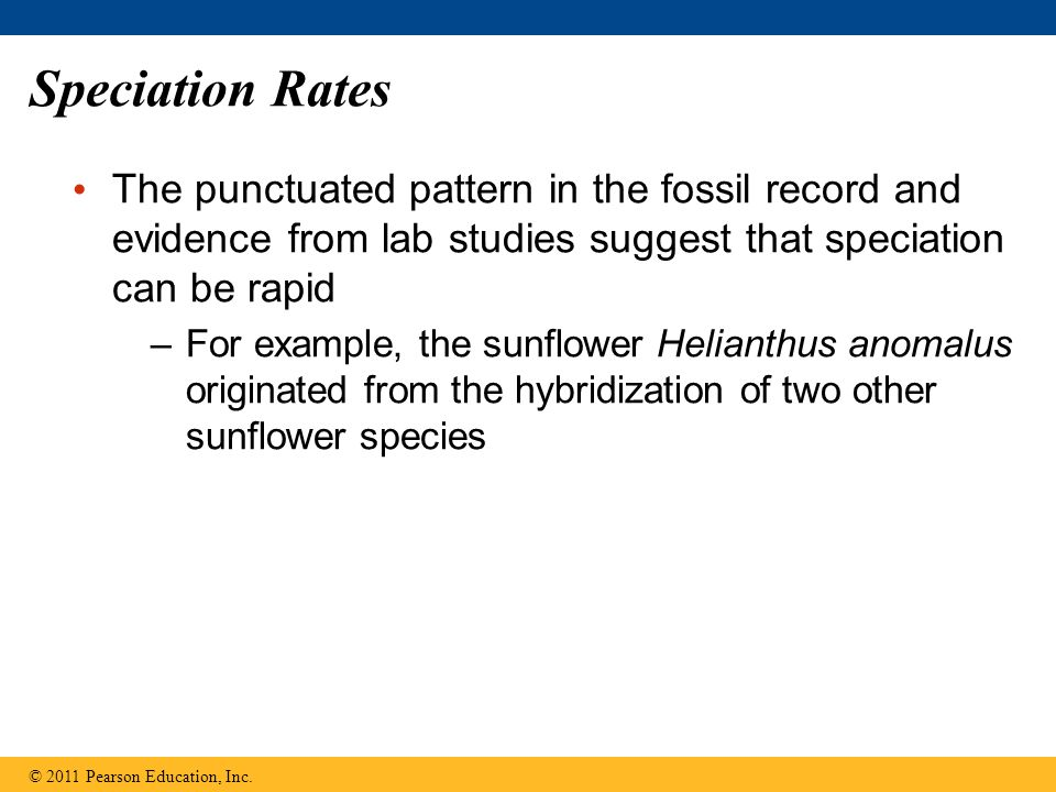 Speciation Rates The punctuated pattern in the fossil record and evidence from lab studies suggest that speciation can be rapid.