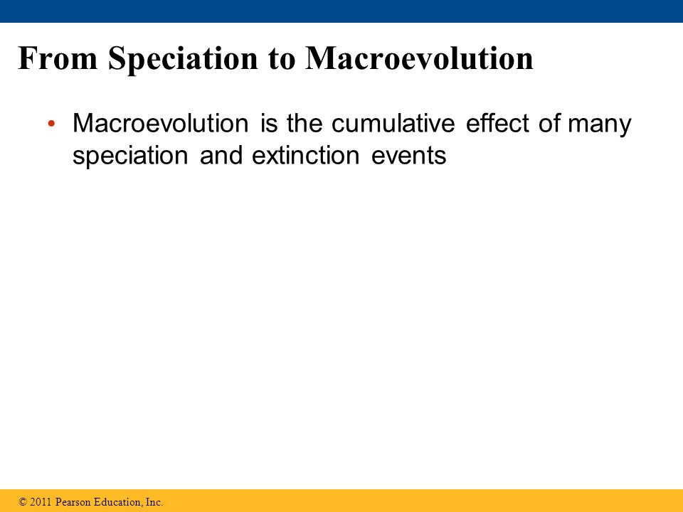 From Speciation to Macroevolution