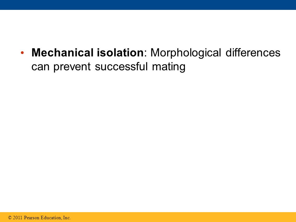 Mechanical isolation: Morphological differences can prevent successful mating