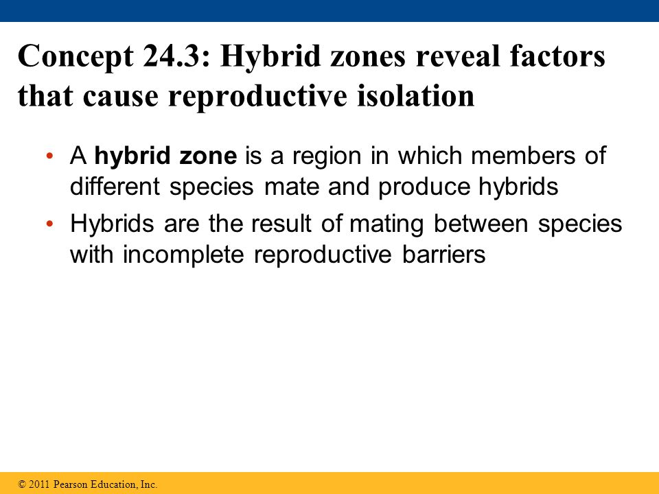 Concept 24.3: Hybrid zones reveal factors that cause reproductive isolation