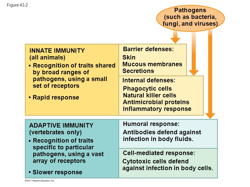 Pathogens (such as bacteria, fungi, and viruses)