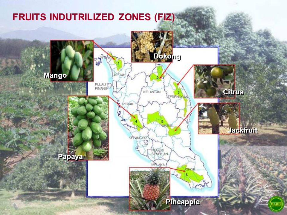FRUITS INDUTRILIZED ZONES (FIZ)