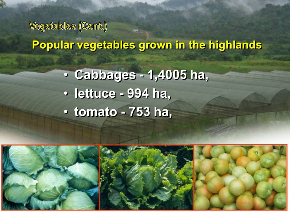 Vegetables (Cont.) Cabbages - 1,4005 ha, lettuce - 994 ha,