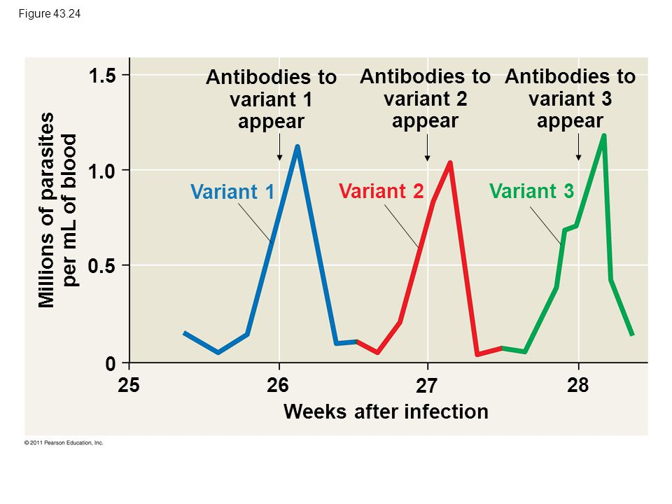 Antibodies to variant 1 appear Antibodies to variant 2 appear