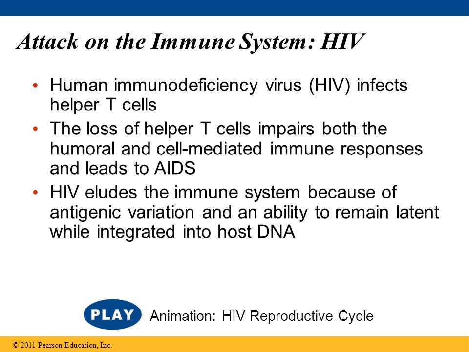 Attack on the Immune System: HIV