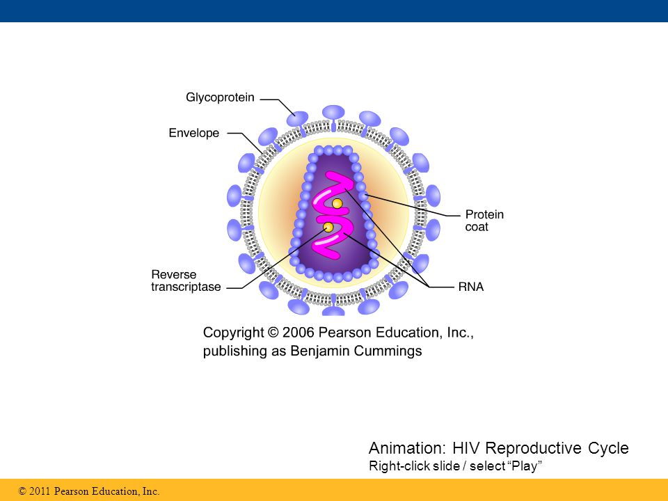 Animation: HIV Reproductive Cycle Right-click slide / select Play