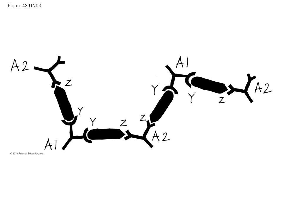Figure 43.UN03 Figure 43.UN03 Appendix A: answer to Test Your Understanding, question 8