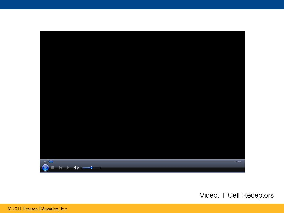 Video: T Cell Receptors