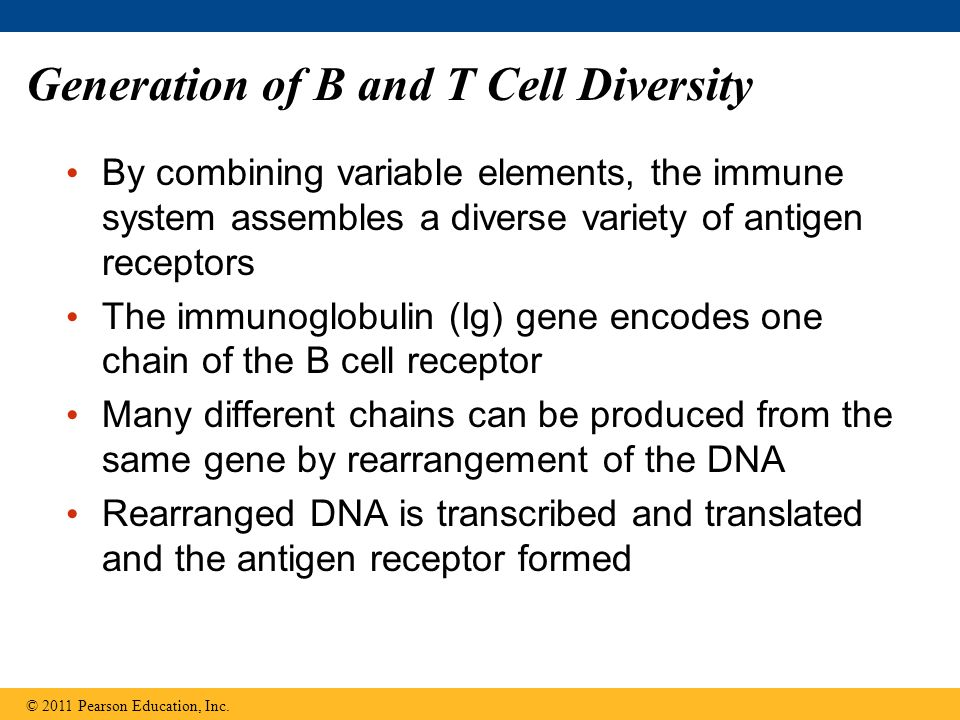 Generation of B and T Cell Diversity