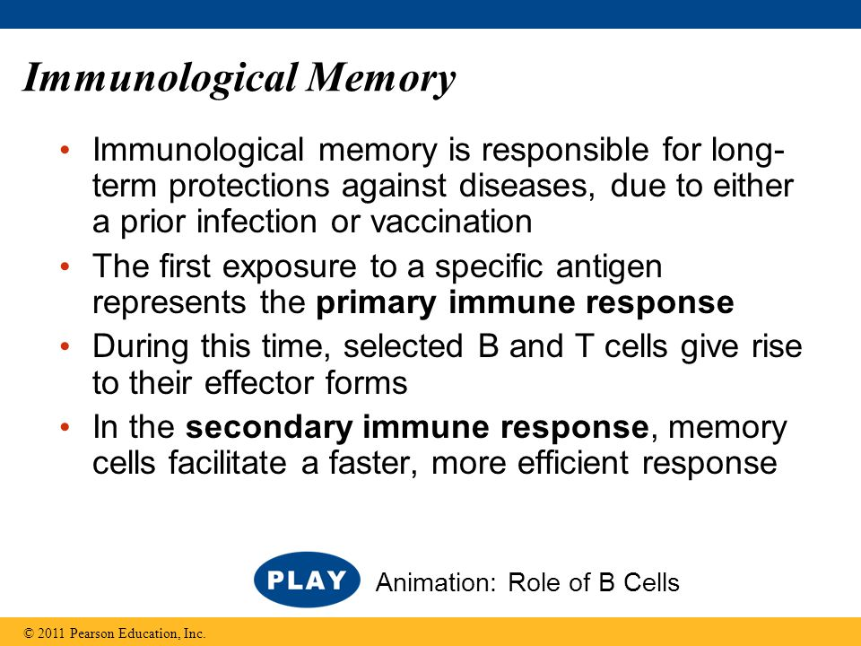 Immunological Memory Immunological memory is responsible for long-term protections against diseases, due to either a prior infection or vaccination.