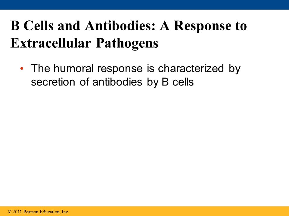 B Cells and Antibodies: A Response to Extracellular Pathogens