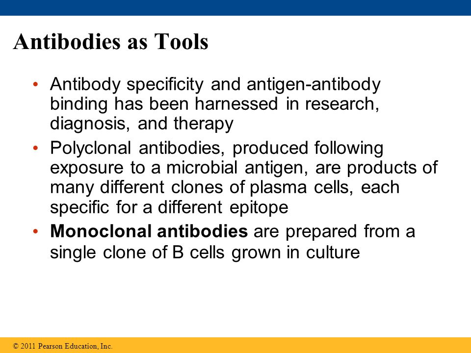 Antibodies as Tools Antibody specificity and antigen-antibody binding has been harnessed in research, diagnosis, and therapy.