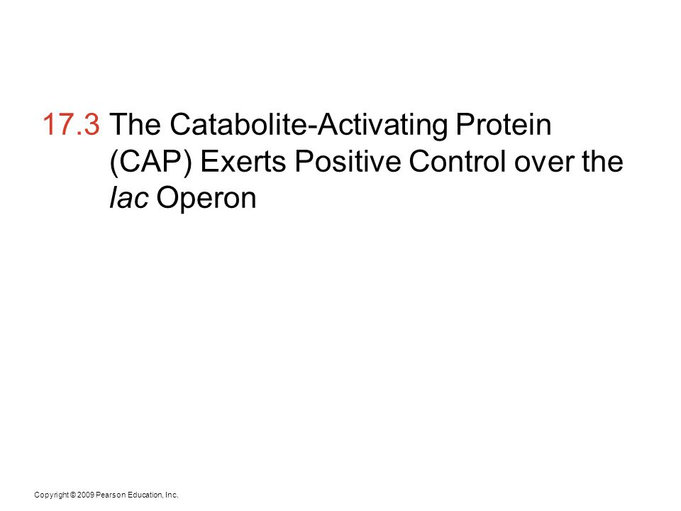17.3 The Catabolite-Activating Protein (CAP) Exerts Positive Control over the lac Operon