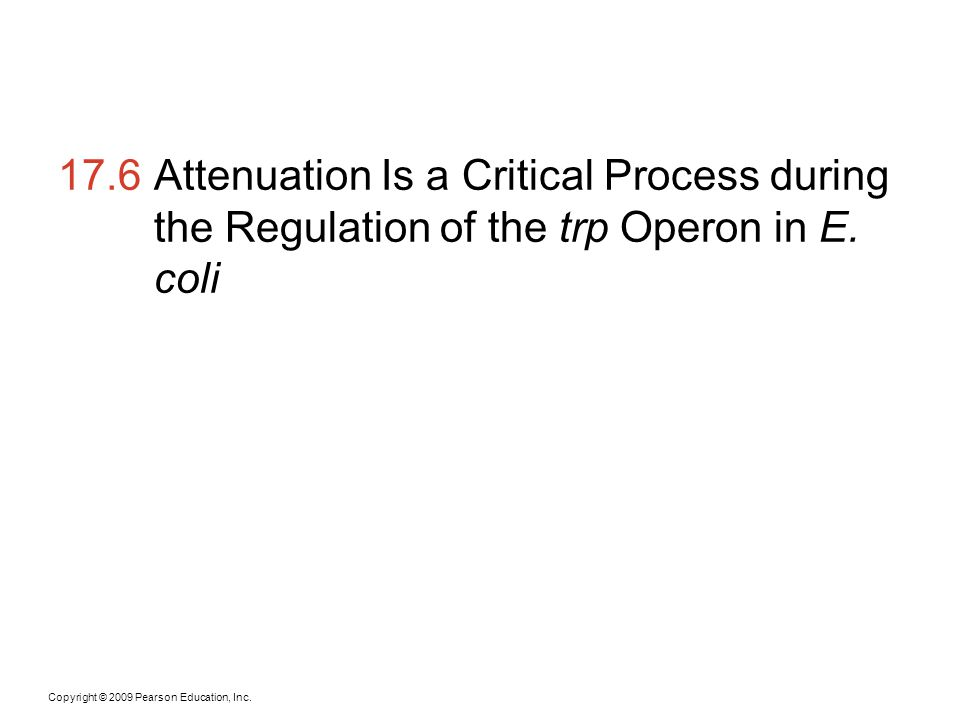 17.6 Attenuation Is a Critical Process during the Regulation of the trp Operon in E. coli