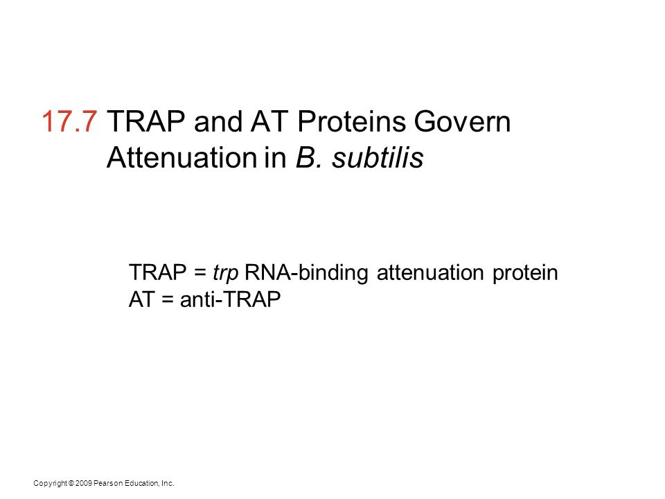 17.7 TRAP and AT Proteins Govern Attenuation in B. subtilis