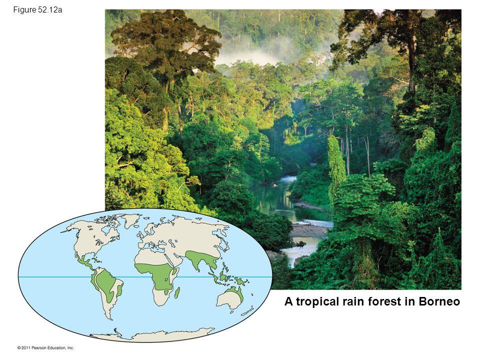 A tropical rain forest in Borneo