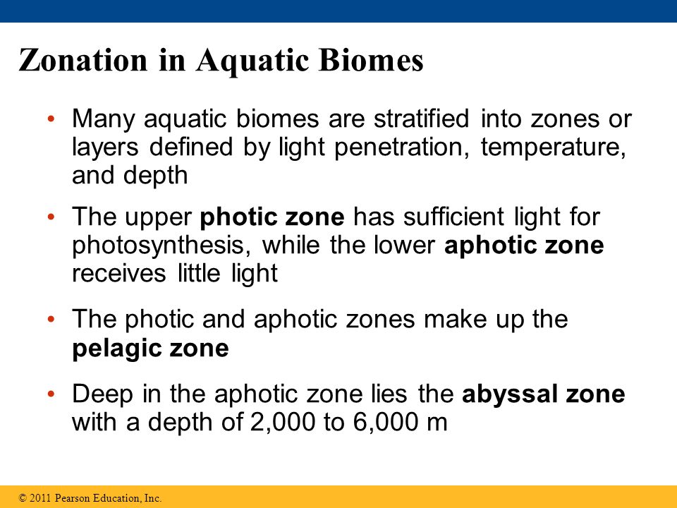 Zonation in Aquatic Biomes