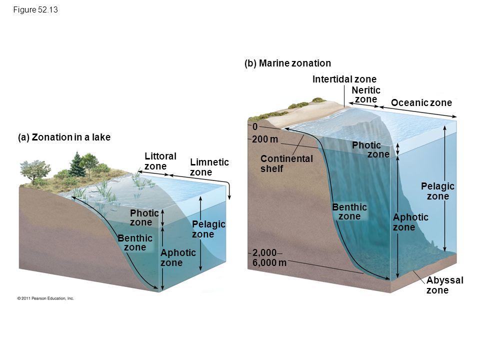 Neritic zone Pelagic zone Benthic zone Benthic zone