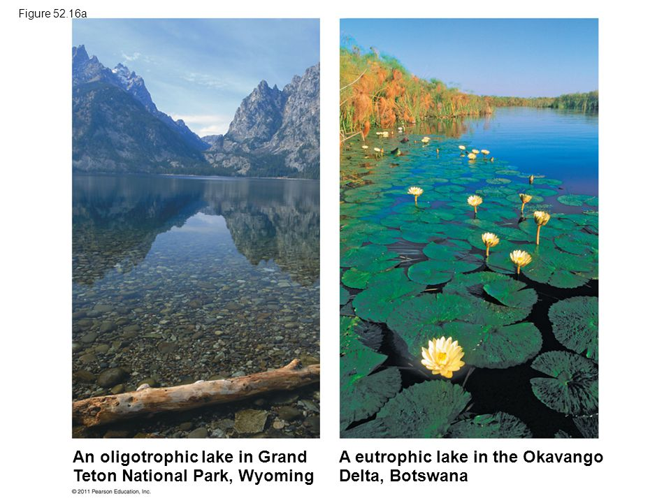 An oligotrophic lake in Grand Teton National Park, Wyoming