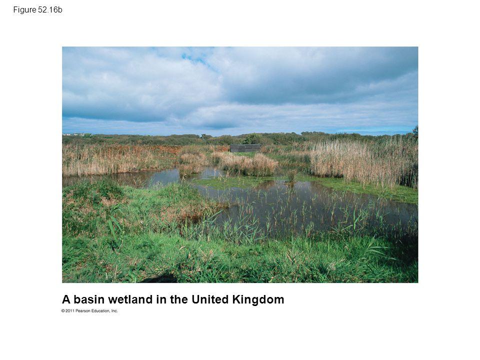 A basin wetland in the United Kingdom