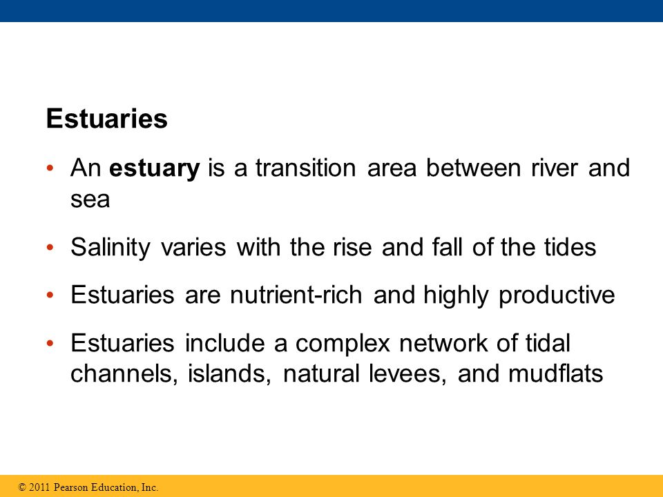 Estuaries An estuary is a transition area between river and sea